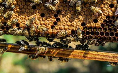 """Včely raja – jedinečný areál, kde sa budú včely """"chovať, tak trochu inak"""""""