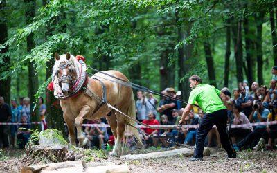 TIP na výlet #16: Niet furmana bez koňa